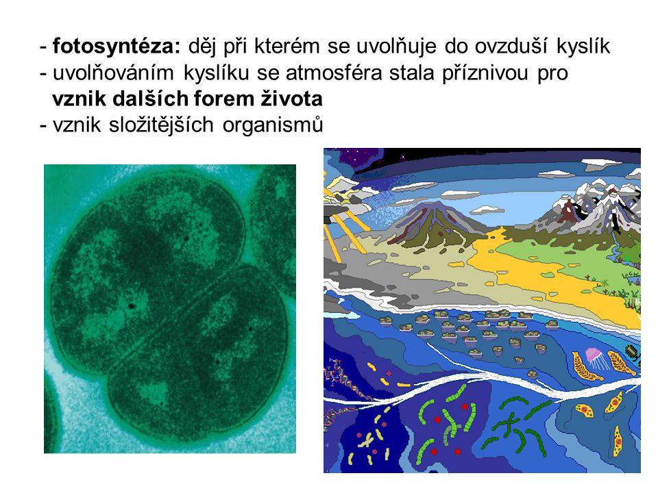 - fotosyntéza: děj při kterém se uvolňuje do ovzduší kyslík - uvolňováním kyslíku se atmosféra stala příznivou pro vznik dalších forem života - vznik