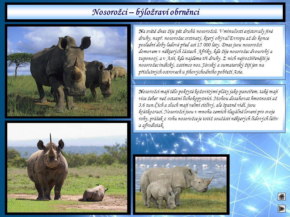 Nosorožci – býložraví obrněnci Na světě dnes žije pět druhů nosorožců. V minulosti existovaly jiné druhy, např. nosorožec srstnatý, který obýval Evrop