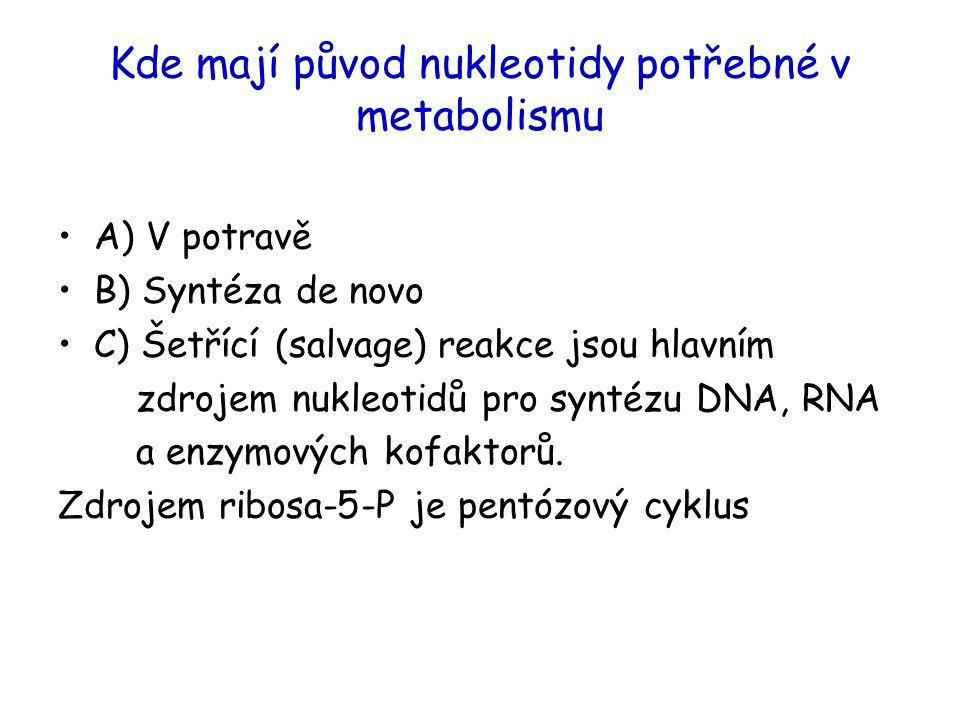 Kde mají původ nukleotidy potřebné v metabolismu A) V potravě B) Syntéza de novo C) Šetřící (salvage) reakce jsou hlavním zdrojem nukleotidů pro syntézu DNA, RNA a enzymových kofaktorů.