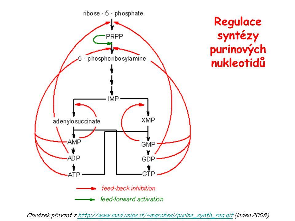 Obrázek převzat z http://www.med.unibs.it/~marchesi/purine_synth_reg.gif (leden 2008)http://www.med.unibs.it/~marchesi/purine_synth_reg.gif Regulace syntézy purinových nukleotidů