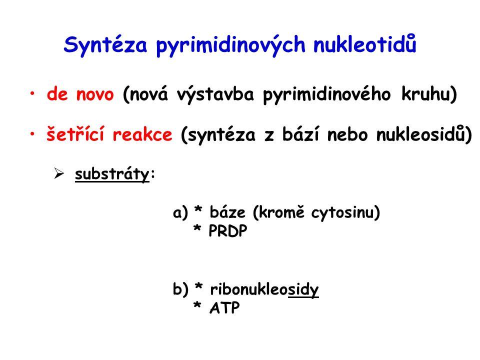 Syntéza pyrimidinových nukleotidů de novo (nová výstavba pyrimidinového kruhu) šetřící reakce (syntéza z bází nebo nukleosidů)  substráty: a) * báze (kromě cytosinu) * PRDP b) * ribonukleosidy * ATP