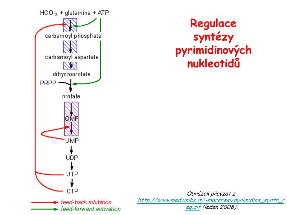 Obrázek převzat z http://www.med.unibs.it/~marchesi/pyrimidine_synth_r eg.gif (leden 2008) http://www.med.unibs.it/~marchesi/pyrimidine_synth_r eg.gif Regulace syntézy pyrimidinových nukleotidů