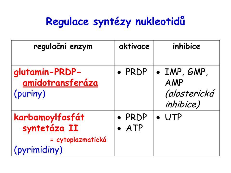 Regulace syntézy nukleotidů regulační enzymaktivaceinhibice glutamin-PRDP- amidotransferáza (puriny)  PRDP  IMP, GMP, AMP (alosterická inhibice) karbamoylfosfát syntetáza II = cytoplazmatická (pyrimidiny)  PRDP  ATP  UTP