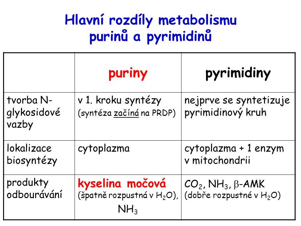 Hlavní rozdíly metabolismu purinů a pyrimidinů purinypyrimidiny tvorba N- glykosidové vazby v 1.