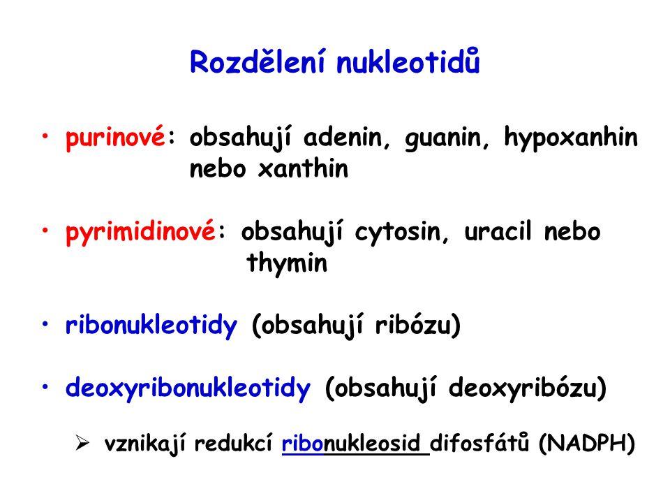 Rozdělení nukleotidů purinové: obsahují adenin, guanin, hypoxanhin nebo xanthin pyrimidinové: obsahují cytosin, uracil nebo thymin ribonukleotidy (obsahují ribózu) deoxyribonukleotidy (obsahují deoxyribózu)  vznikají redukcí ribonukleosid difosfátů (NADPH)