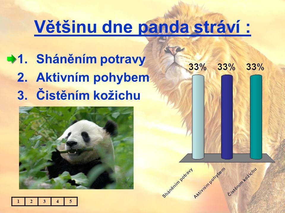 Většinu dne panda stráví : 1.Sháněním potravy 2.Aktivním pohybem 3.Čistěním kožichu 12345