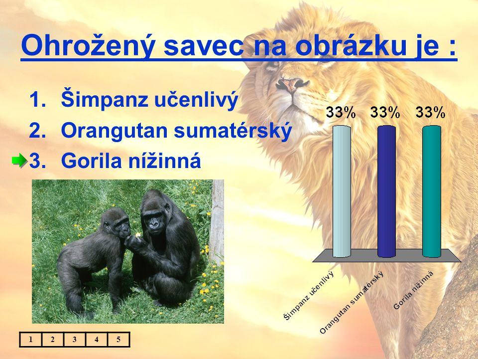 Ohrožený savec na obrázku je : 1.Šimpanz učenlivý 2.Orangutan sumatérský 3.Gorila nížinná 12345