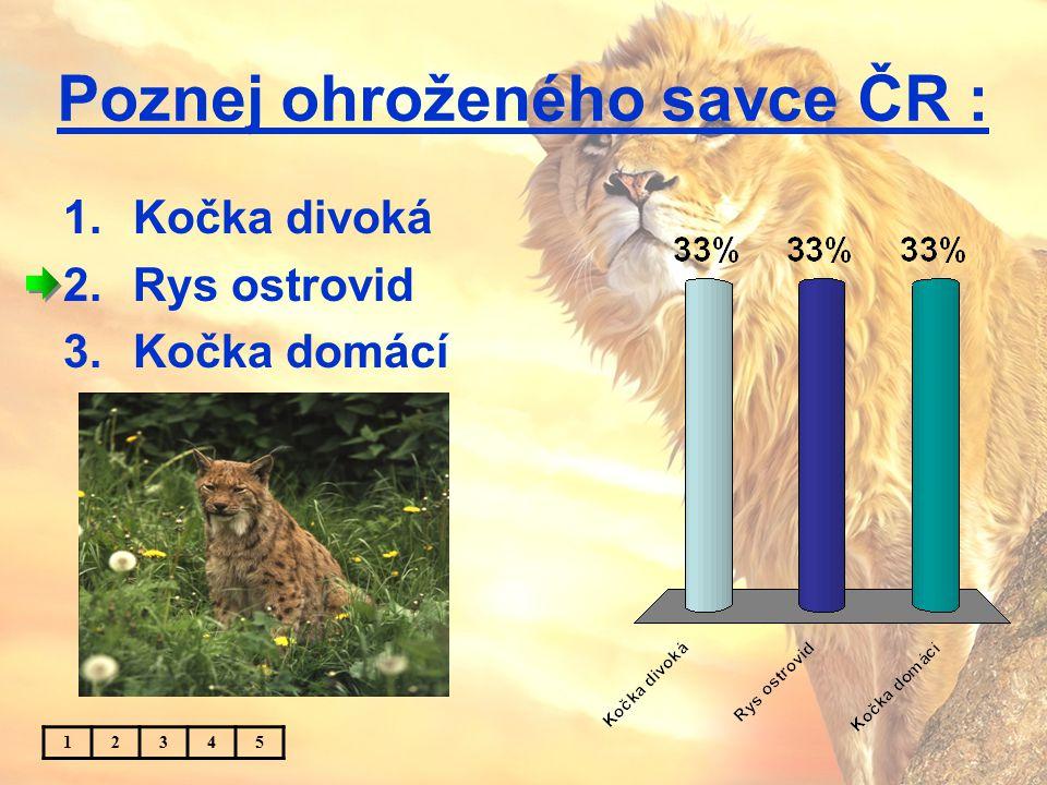 Poznej ohroženého savce ČR : 1.Kočka divoká 2.Rys ostrovid 3.Kočka domácí 12345