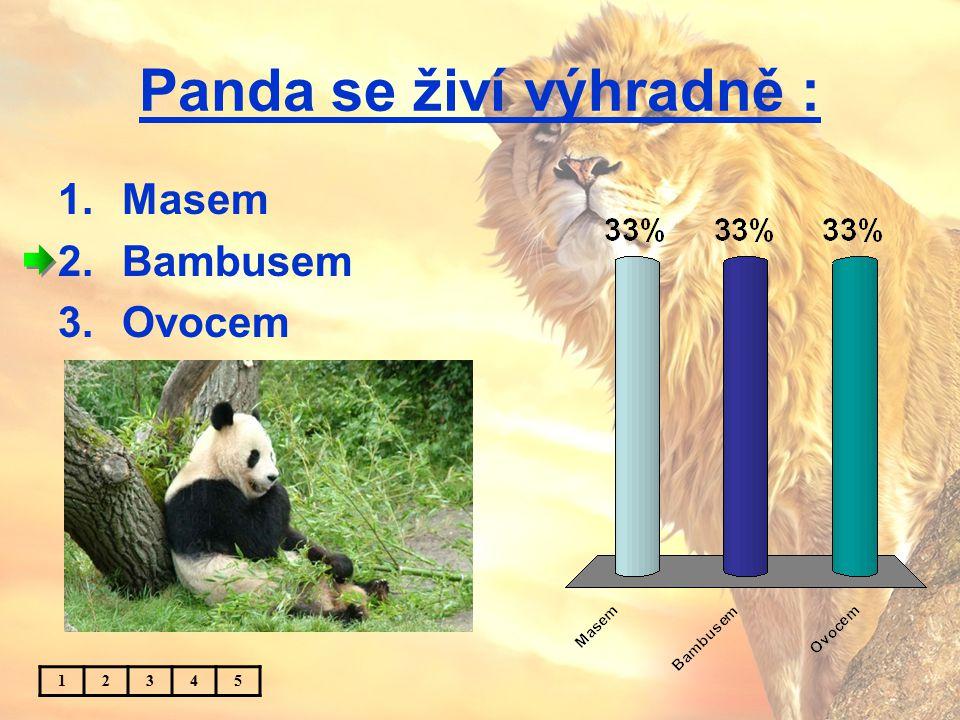 Panda se živí výhradně : 1.Masem 2.Bambusem 3.Ovocem 12345
