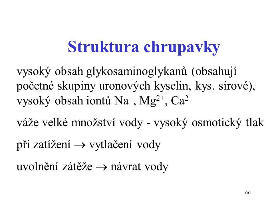 66 Struktura chrupavky vysoký obsah glykosaminoglykanů (obsahují početné skupiny uronových kyselin, kys. sírové), vysoký obsah iontů Na +, Mg 2+, Ca 2