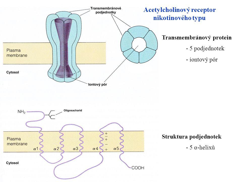 Acetylcholinový receptor nikotinového typu Transmembránový protein - 5 podjednotek - iontový pór Struktura podjednotek - 5 α-helixů