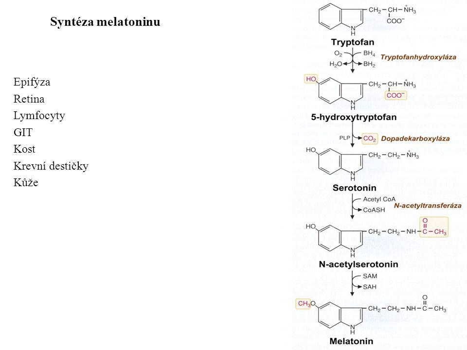Syntéza melatoninu Epifýza Retina Lymfocyty GIT Kost Krevní destičky Kůže