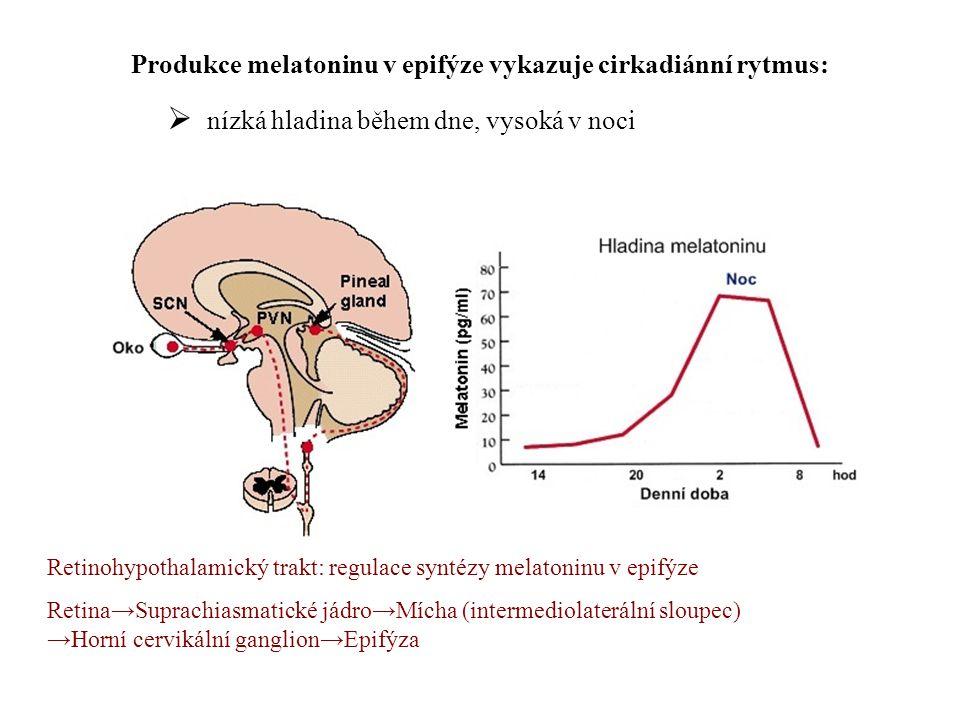 Produkce melatoninu v epifýze vykazuje cirkadiánní rytmus:  nízká hladina během dne, vysoká v noci Retinohypothalamický trakt: regulace syntézy melatoninu v epifýze Retina→Suprachiasmatické jádro→Mícha (intermediolaterální sloupec) →Horní cervikální ganglion→Epifýza