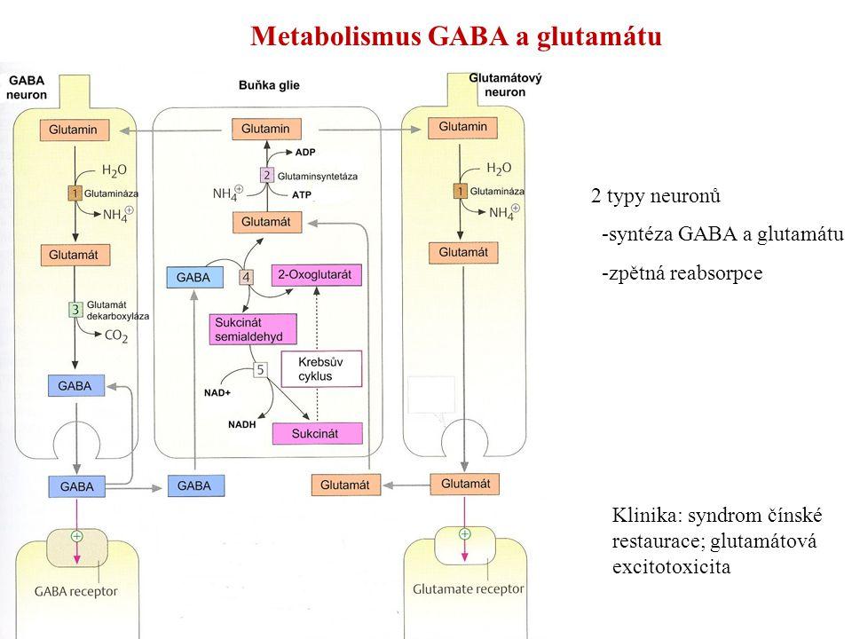 Metabolismus GABA a glutamátu 2 typy neuronů -syntéza GABA a glutamátu -zpětná reabsorpce Klinika: syndrom čínské restaurace; glutamátová excitotoxici