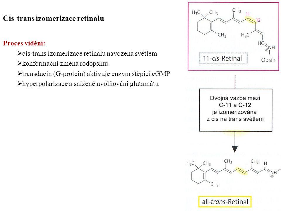 Cis-trans izomerizace retinalu Proces vidění:  cis-trans izomerizace retinalu navozená světlem  konformační změna rodopsinu  transducin (G-protein) aktivuje enzym štěpící cGMP  hyperpolarizace a snížené uvolňování glutamátu