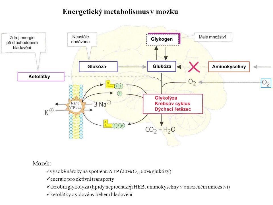 Mozek: vysoké nároky na spotřebu ATP (20% O 2, 60% glukózy) energie pro aktivní transporty aerobní glykolýza (lipidy neprocházejí HEB, aminokyseliny v