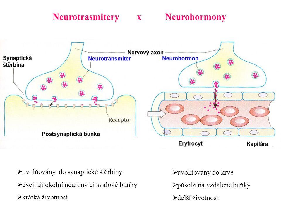NeurotrasmiteryxNeurohormony  uvolňovány do synaptické štěrbiny  excitují okolní neurony či svalové buňky  krátká životnost  uvolňovány do krve  působí na vzdálené buňky  delší životnost