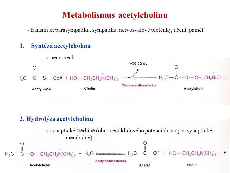 Metabolismus acetylcholinu 1.Syntéza acetylcholinu - v neuronech 2. Hydrolýza acetylcholinu - v synaptické štěrbině (obnovení klidového potenciálu na