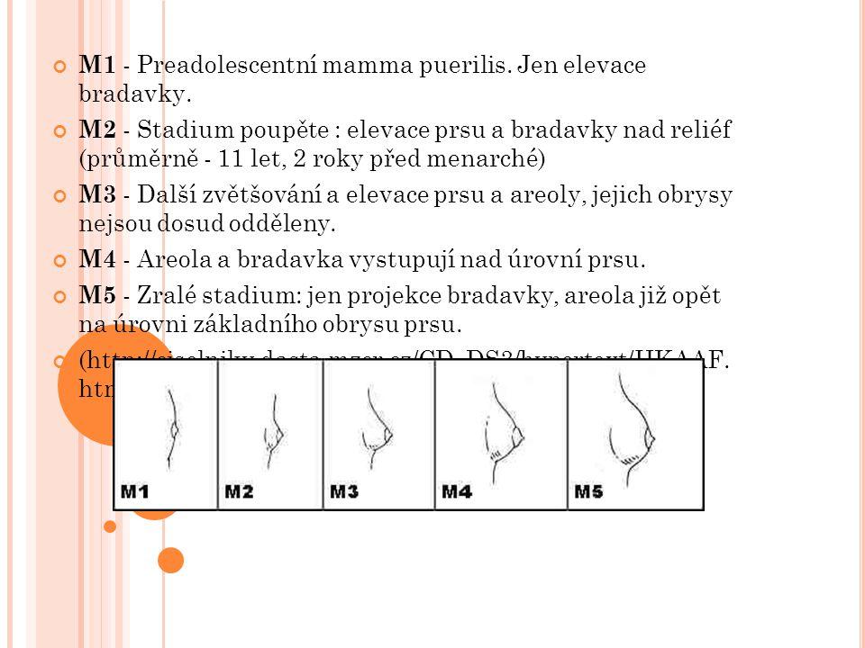 M1 - Preadolescentní mamma puerilis. Jen elevace bradavky. M2 - Stadium poupěte : elevace prsu a bradavky nad reliéf (průměrně - 11 let, 2 roky před m
