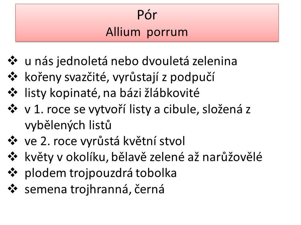 Pór Allium porrum Pór Allium porrum  u nás jednoletá nebo dvouletá zelenina  kořeny svazčité, vyrůstají z podpučí  listy kopinaté, na bázi žlábkovité  v 1.