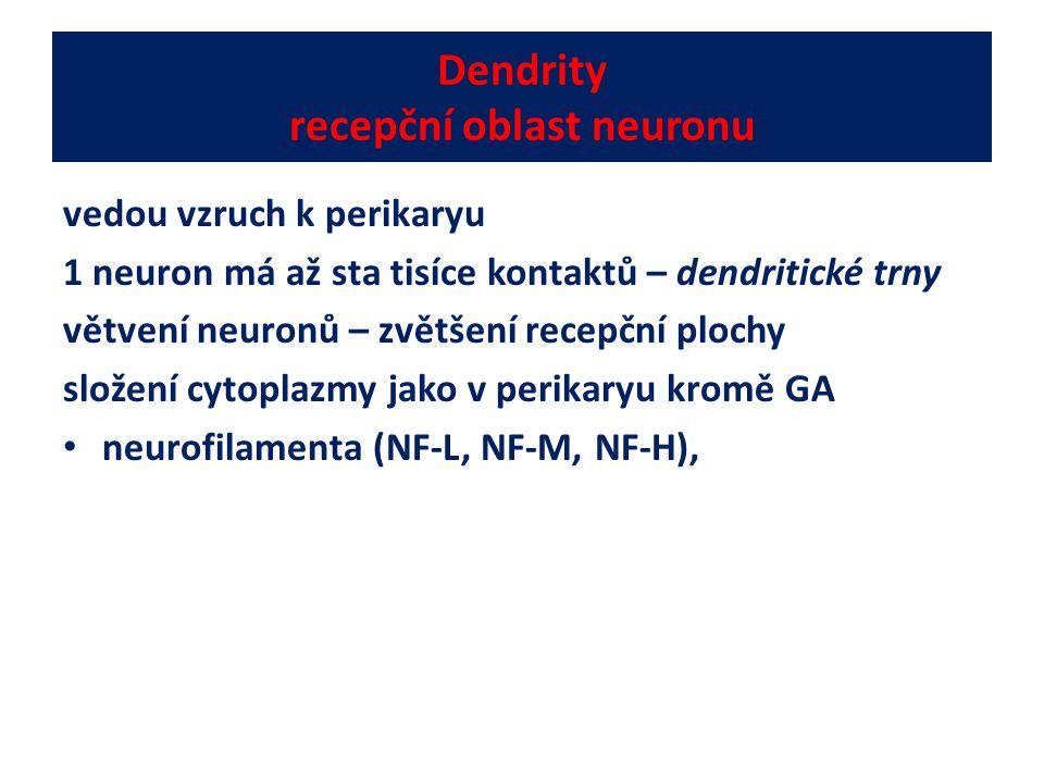 Dendrity recepční oblast neuronu vedou vzruch k perikaryu 1 neuron má až sta tisíce kontaktů – dendritické trny větvení neuronů – zvětšení recepční pl