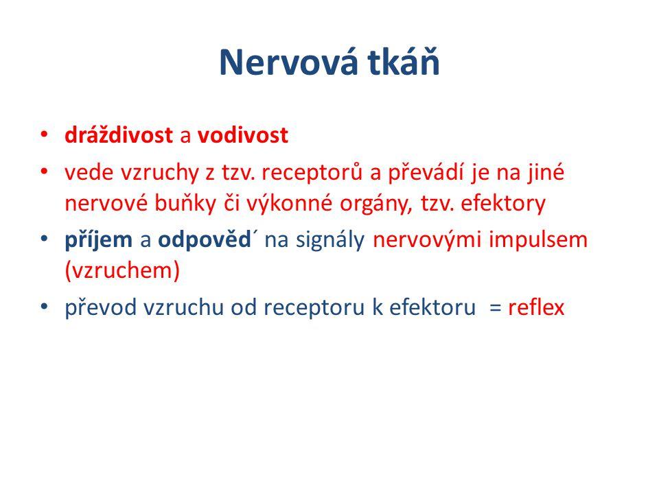 Nervová tkáň dráždivost a vodivost vede vzruchy z tzv. receptorů a převádí je na jiné nervové buňky či výkonné orgány, tzv. efektory příjem a odpověd´