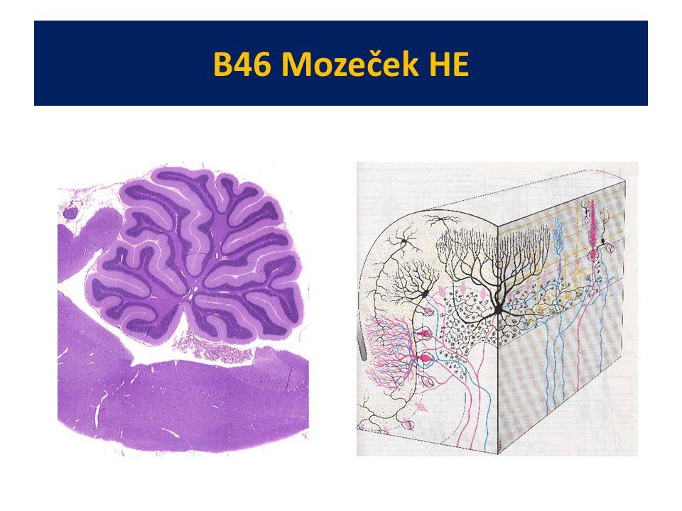 B46 Mozeček HE