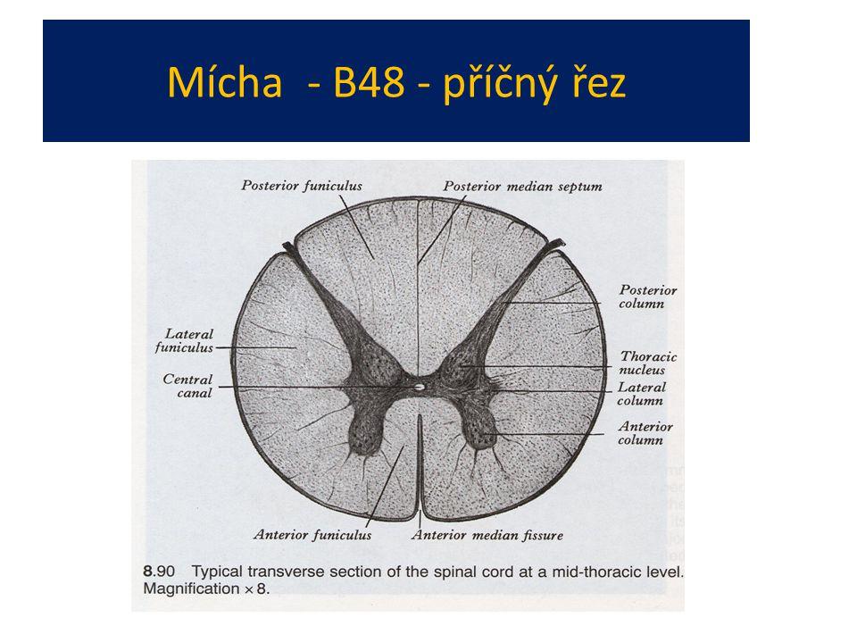 Mícha - B48 - příčný řez