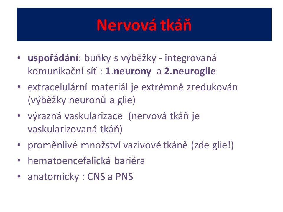Nervová tkáň uspořádání: buňky s výběžky - integrovaná komunikační síť : 1.neurony a 2.neuroglie extracelulární materiál je extrémně zredukován (výběž
