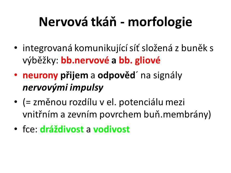 Nervová tkáň - morfologie integrovaná komunikující síť složená z buněk s výběžky: bb.nervové a bb. gliové neurony přijem a odpověd´ na signály nervový