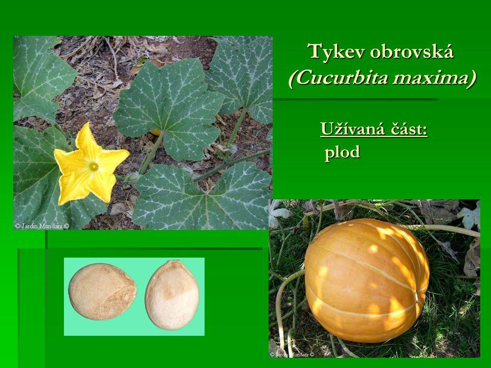 Tykev obrovská (Cucurbita maxima) Užívaná část: plod plod