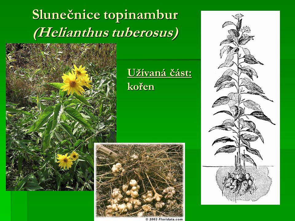 Slunečnice topinambur (Helianthus tuberosus) Užívaná část: kořen