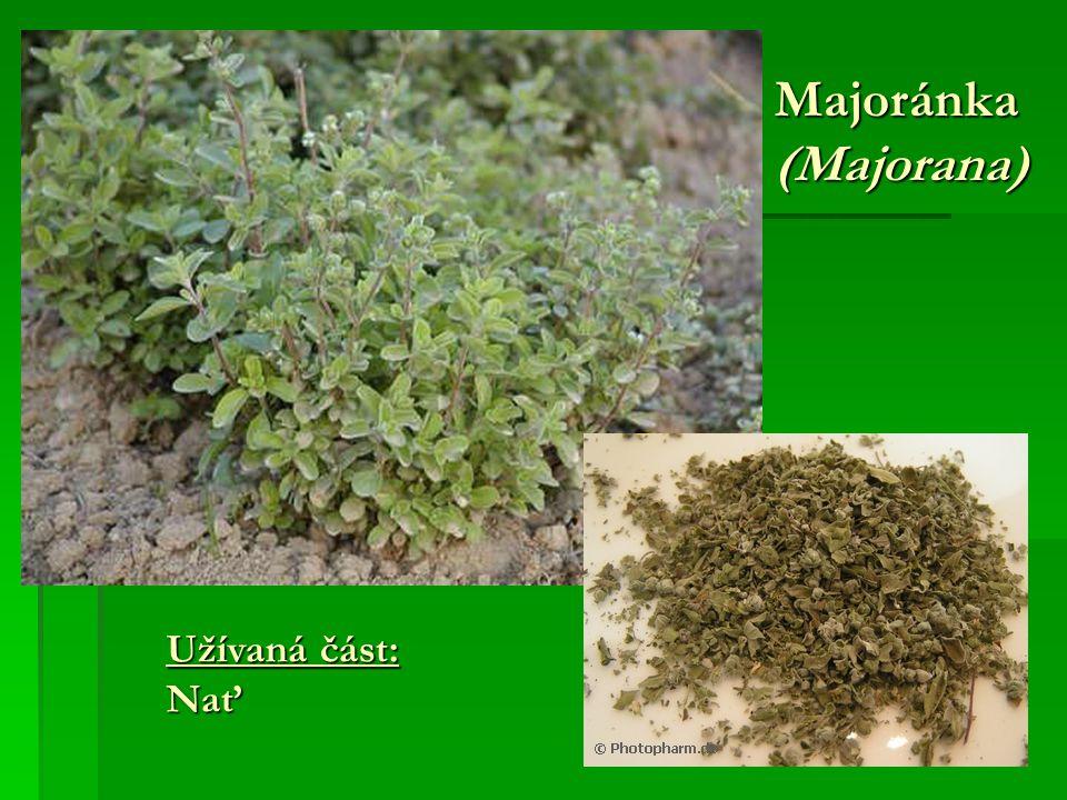 Majoránka (Majorana) Užívaná část: Nať