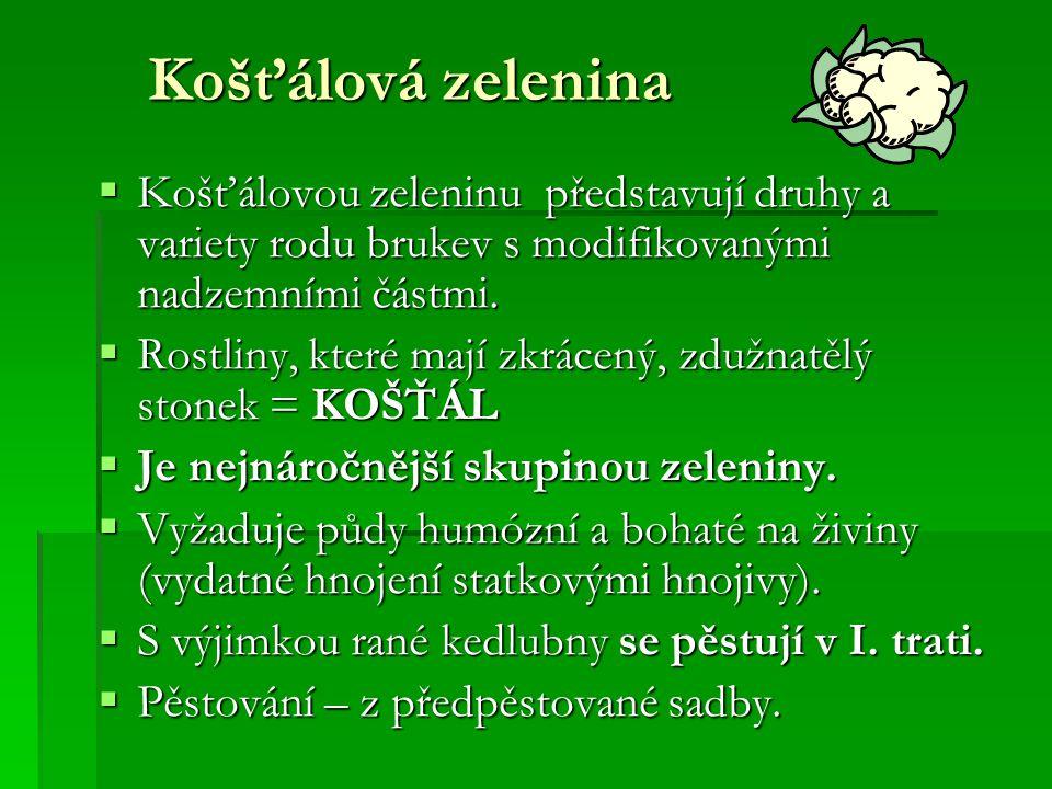 Košťálová zelenina  Košťálovou zeleninu představují druhy a variety rodu brukev s modifikovanými nadzemními částmi.  Rostliny, které mají zkrácený,