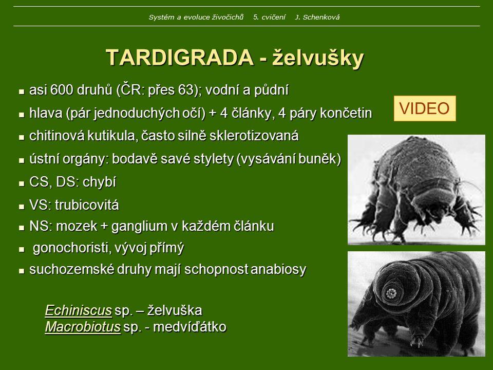 Echiniscus sp. – želvuška Macrobiotus sp. - medvíďátko TARDIGRADA - želvušky asi 600 druhů (ČR: přes 63); vodní a půdní asi 600 druhů (ČR: přes 63); v