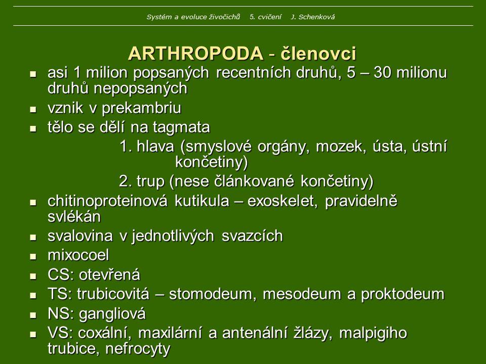 ARTHROPODA - členovci asi 1 milion popsaných recentních druhů, 5 – 30 milionu druhů nepopsaných asi 1 milion popsaných recentních druhů, 5 – 30 milion