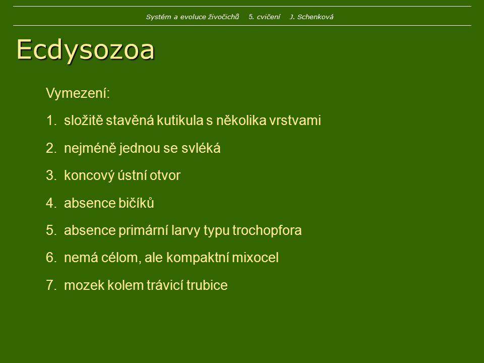 Ecdysozoa Vymezení: 1.složitě stavěná kutikula s několika vrstvami 2.nejméně jednou se svléká 3.koncový ústní otvor 4.absence bičíků 5.absence primárn