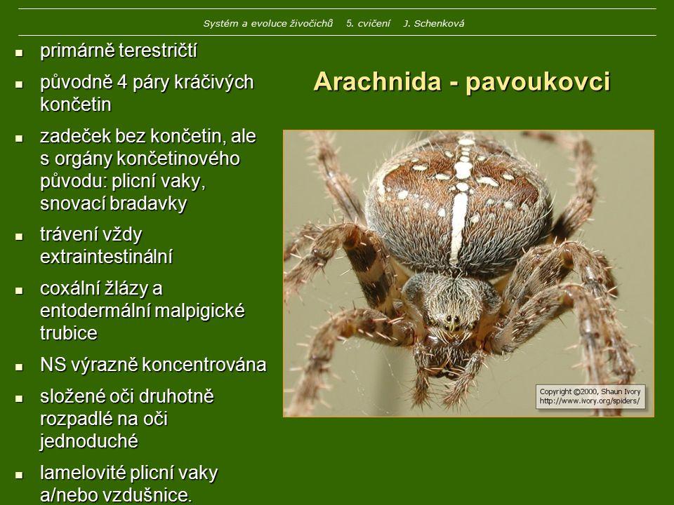 Arachnida - pavoukovci primárně terestričtí primárně terestričtí původně 4 páry kráčivých končetin původně 4 páry kráčivých končetin zadeček bez konče
