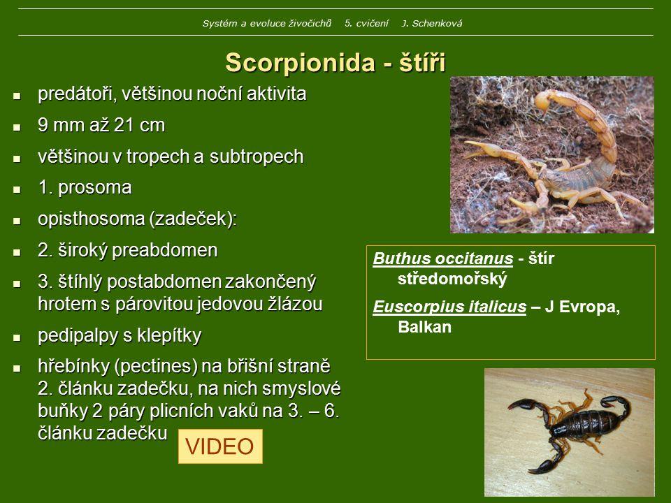 Scorpionida - štíři predátoři, většinou noční aktivita predátoři, většinou noční aktivita 9 mm až 21 cm 9 mm až 21 cm většinou v tropech a subtropech