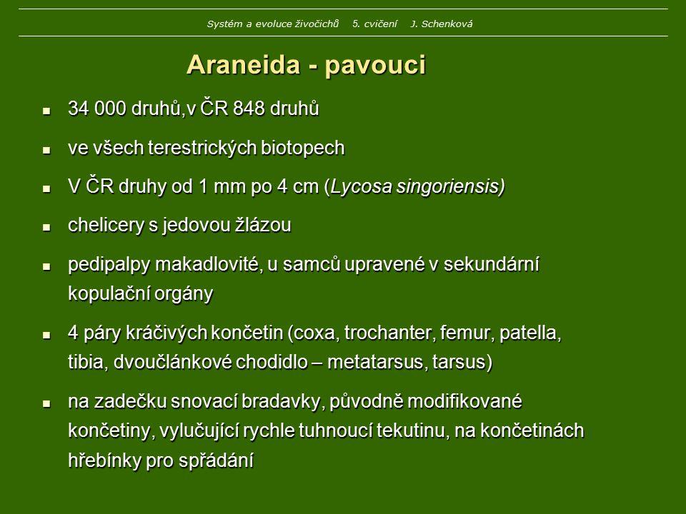 Araneida - pavouci 34 000 druhů,v ČR 848 druhů 34 000 druhů,v ČR 848 druhů ve všech terestrických biotopech ve všech terestrických biotopech V ČR druh