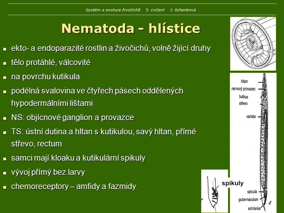 Enoplea zahrnuje většinu dřívější skupiny Adenophorea vylučovací orgány jsou kožní žlázy, amfidy na přídi slabá kutikula slabá kutikula Trichocephalida – nitkovci Mermis – strunice Mermis – strunice dospělci volně žijící, juvenilové parazitují u hmyzu dospělci volně žijící, juvenilové parazitují u hmyzu Trichuris trichuria - tenkohlavec lidský Trichuris trichuria - tenkohlavec lidský parazit tlustého střeva člověka (záněty) parazit tlustého střeva člověka (záněty) Systém a evoluce živočichů 5.