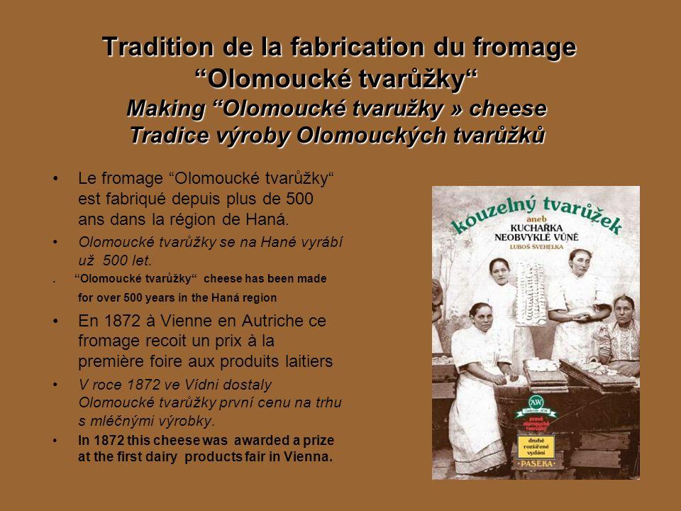 Tradition de la fabrication du fromage Olomoucké tvarůžky Making Olomoucké tvaružky » cheese Tradice výroby Olomouckých tvarůžků Le fromage Olomoucké