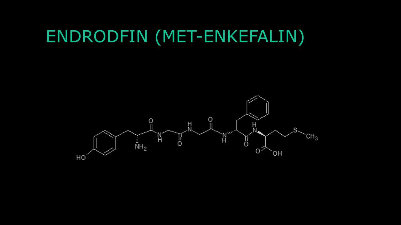 Charakteristika Excitační tachikyn, resp. neurokinin Rychlá kontrakce hladkého svalstva pomocí NK 1 receptorů (spřažen s G-proteinem) Přenos nocicepti