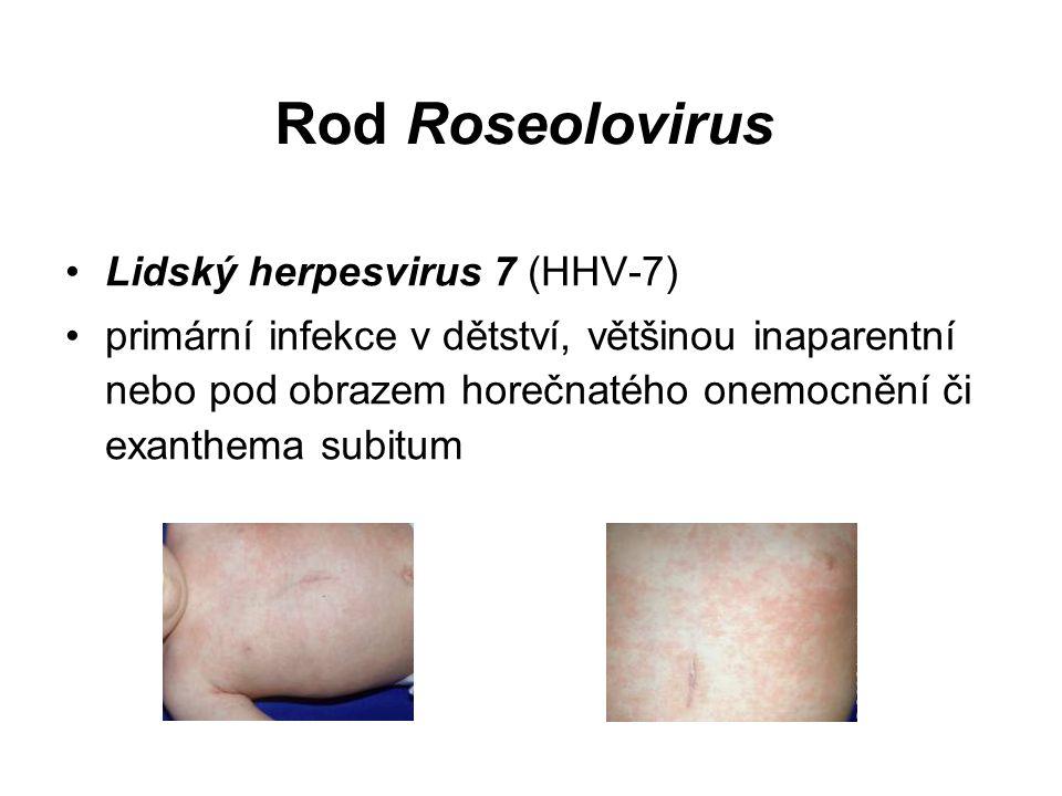 Rod Roseolovirus Lidský herpesvirus 7 (HHV-7) primární infekce v dětství, většinou inaparentní nebo pod obrazem horečnatého onemocnění či exanthema subitum