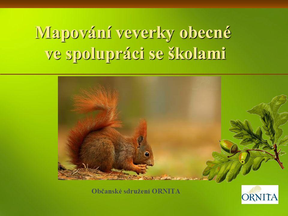Mapování veverky obecné ve spolupráci se školami Občanské sdružení ORNITA