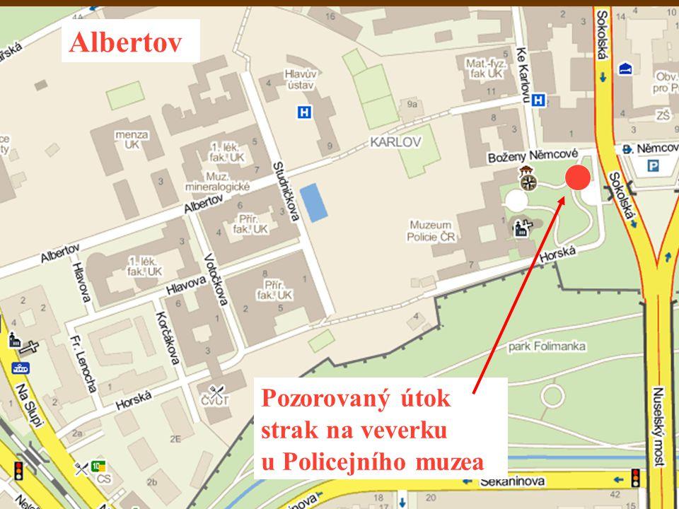 Pozorovaný útok strak na veverku u Policejního muzea Albertov
