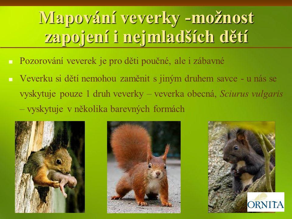 Mapování veverky -možnost zapojení i nejmladších dětí Pozorování veverek je pro děti poučné, ale i zábavné Veverku si dětí nemohou zaměnit s jiným dru