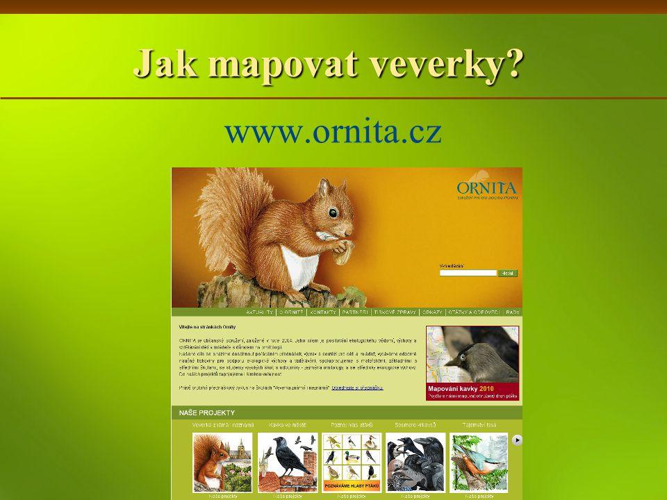 Jak mapovat veverky? www.ornita.cz
