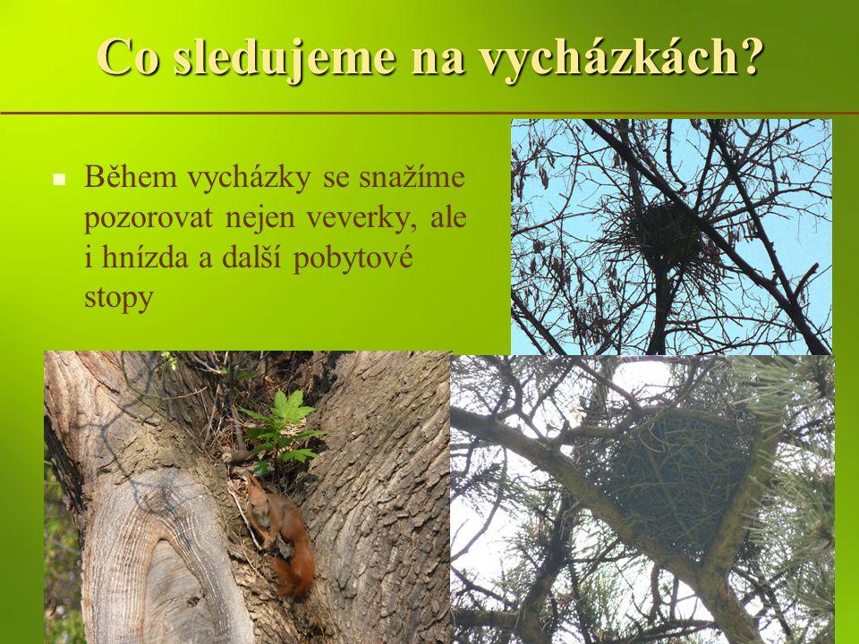 Vycházky za veverkami - lokality Duben 2011 - začátek realizace 5 vycházek do 4 různých lokalit, 142 dětí Veverky pozorovány spíše v městských parcích, zde také větší pravděpodobnost pozorování hnízda