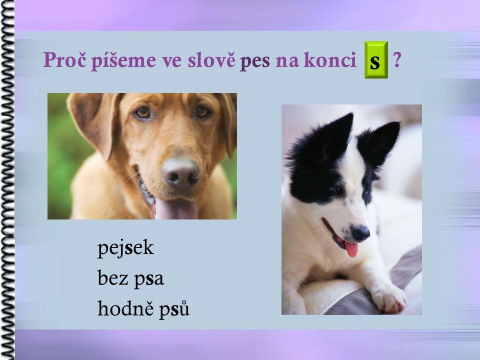 Pro č píšeme ve slov ě pes na konci bez p s a hodn ě p s ů s pej s ek